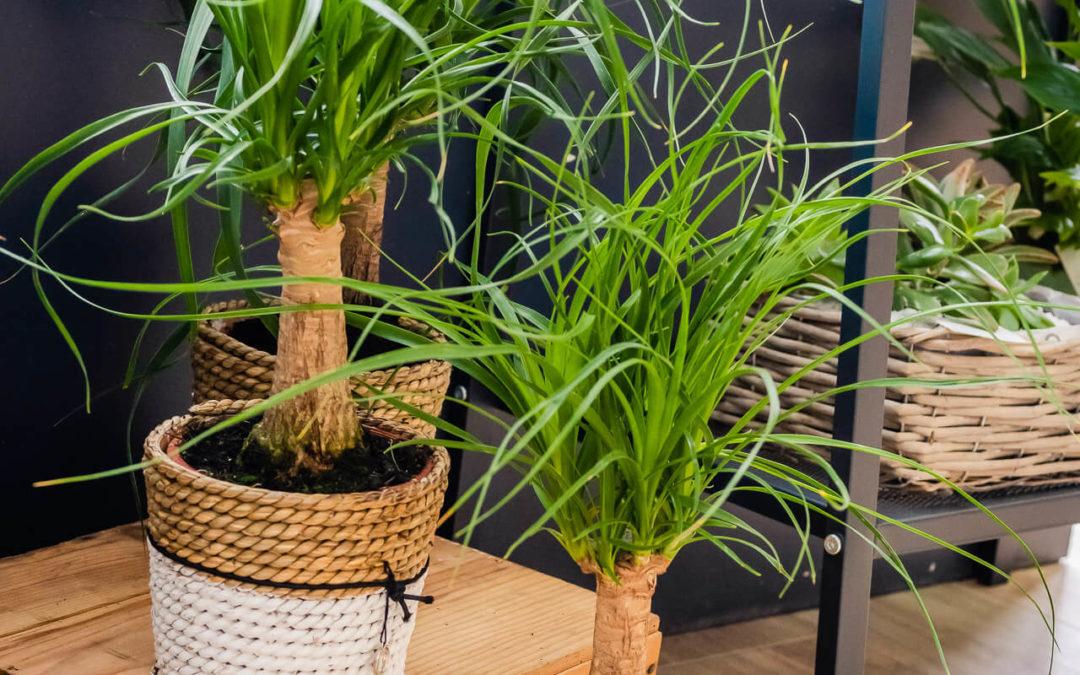 Plantes d'intérieur à Saint-Avold
