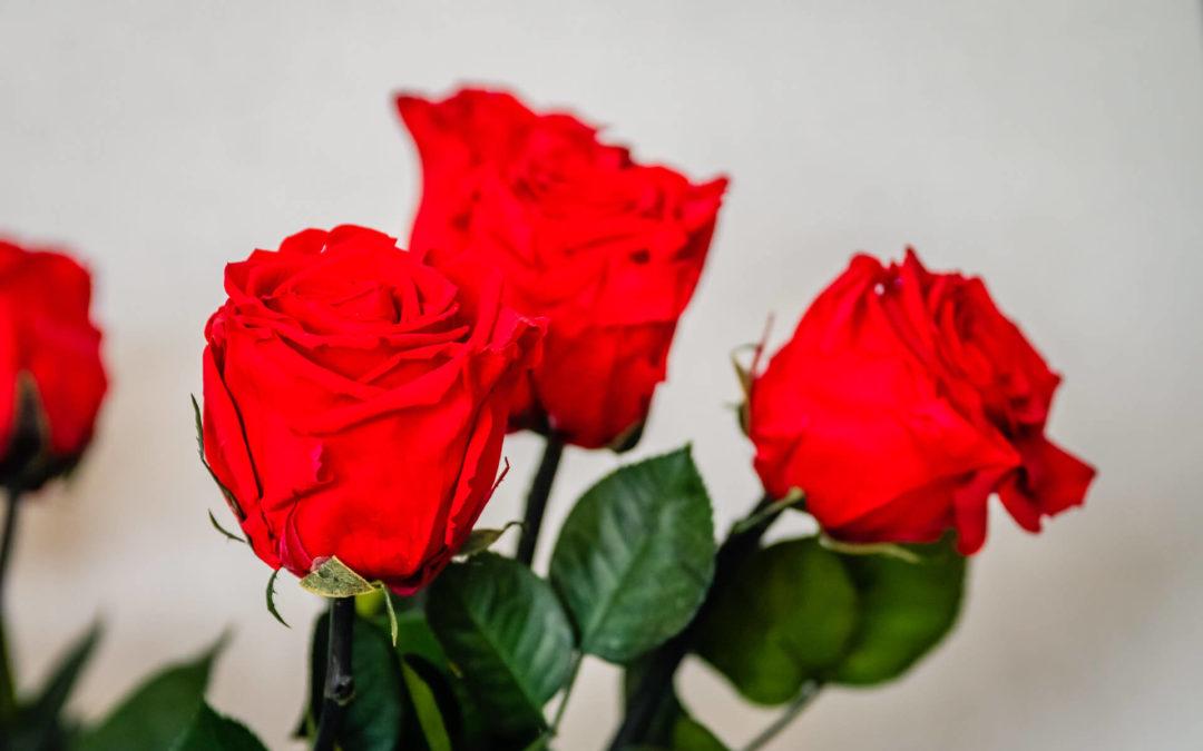 Quelles fleurs pour la St Valentin à Saint-Avold?