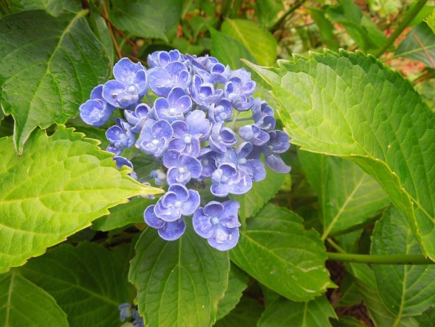 Choisir ses plantes d'extérieur à Saint-Avold