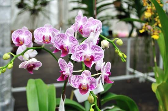 Choisir ses orchidées à Saint-Avold